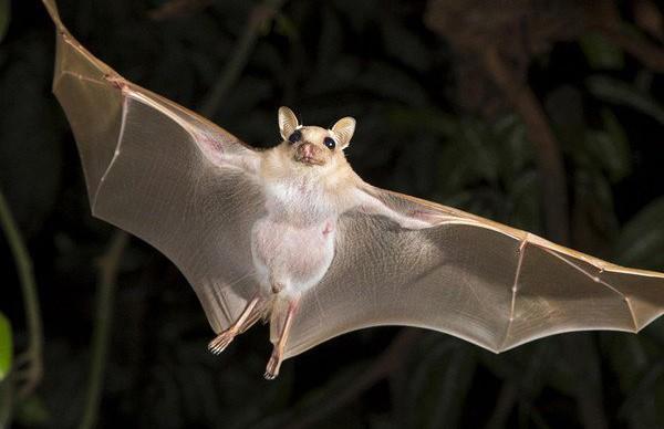Как летучие мыши определяют положение окружающих предметов?