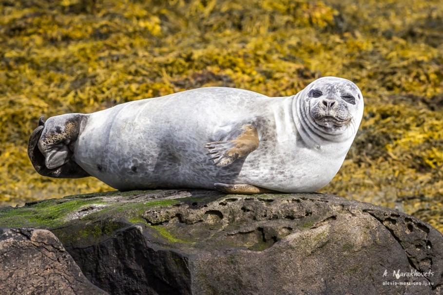 Как называется место на берегу, где обитают тюлени?